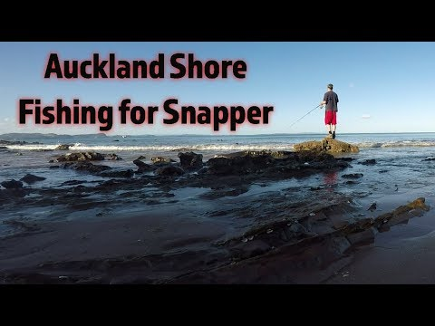Shore Fishing Auckland For Snapper