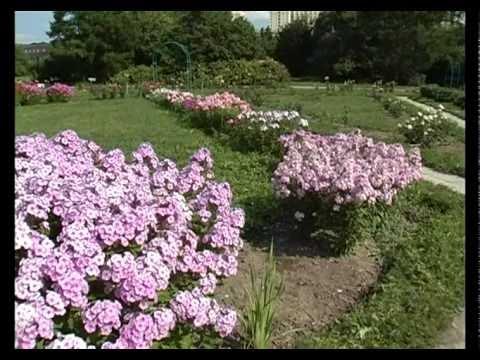 Сад и огород. Флоксы (2)