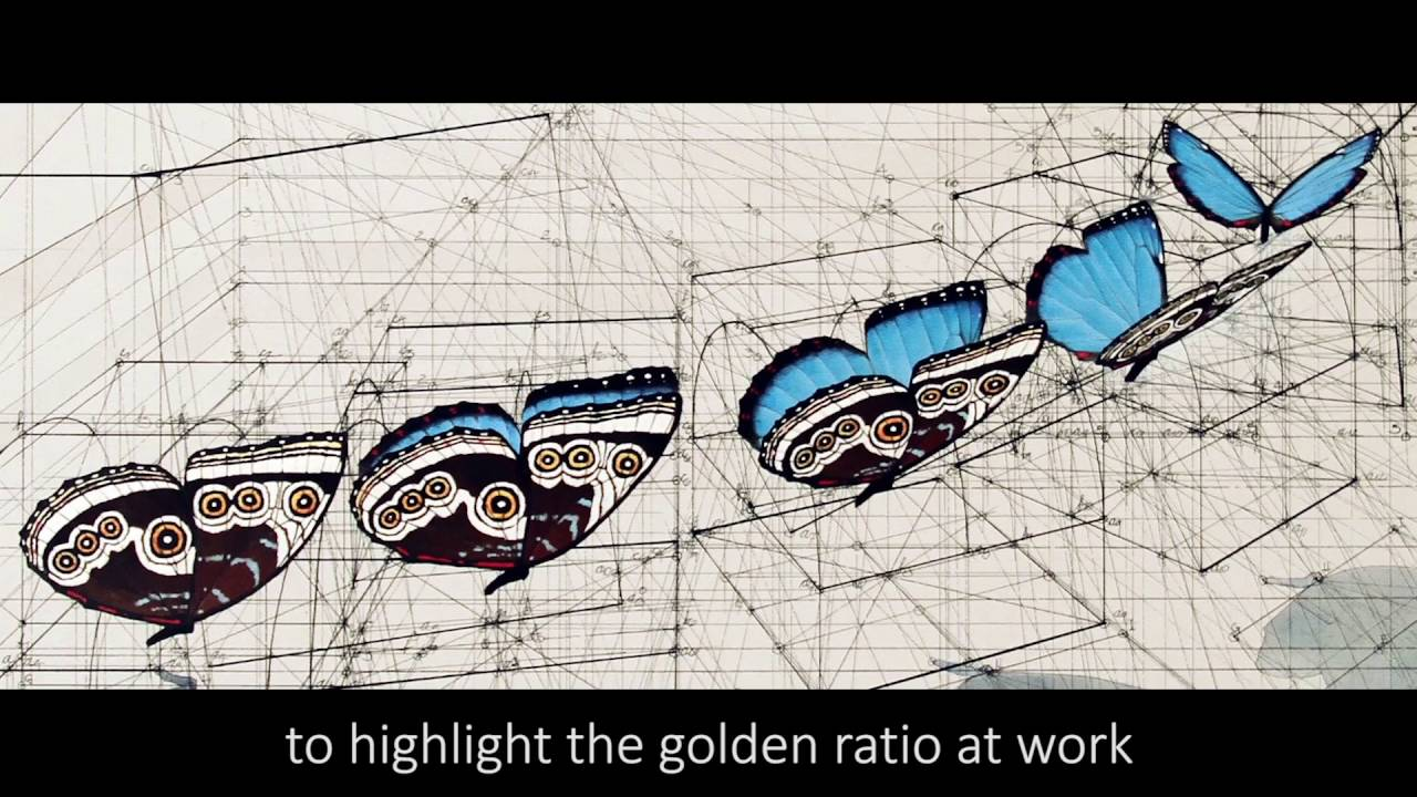 Golden Ratio Coloring Book By Rafael Araujo Youtube
