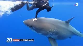 Comportement irresponsable de la plongeuse Ocean Ramsey ? - 18/01/2019