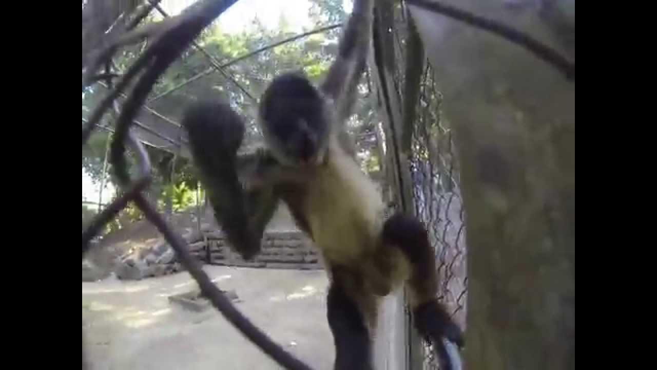 Monkey Mad