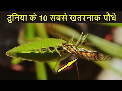 मांस खाने वाले पेड़ पौधे | Most Amazing and Dangerous Plants in the world