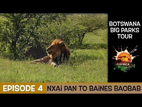 Botswana Big Parks Tour - (Nxai Pan to Baines Baobab Episode 4)