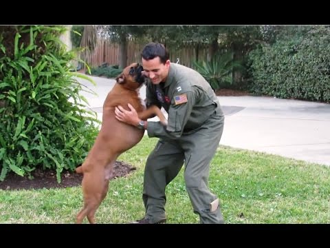 Dogs Welcoming Soldiers Home Compilation 2015 [NEW]