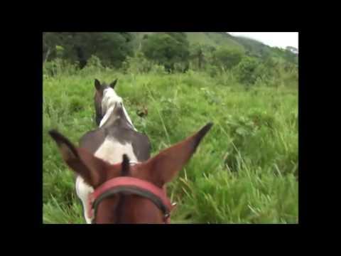 Lida na fazenda pegando cavalos na mulinha| ADB