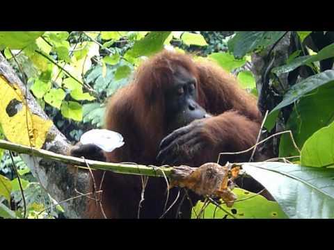 Indonesia Sumatra Jungle Trek