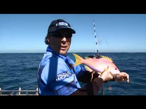 Long Fin Orange Perch, Snapper, Flathead and Morwong off Sydney
