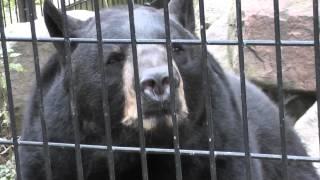 On Location: The American Black Bear