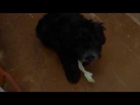 ZEUS MY BABY DOG LOVES CABBAGE