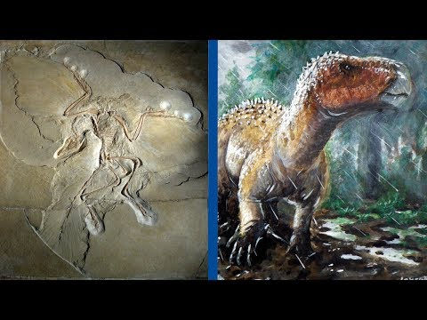 The Most Important Discoveries in Paleontology - Part 1