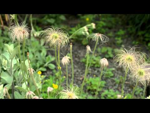 Paul J. Ciener Botanical Garden In 4K (Samsung NX1)