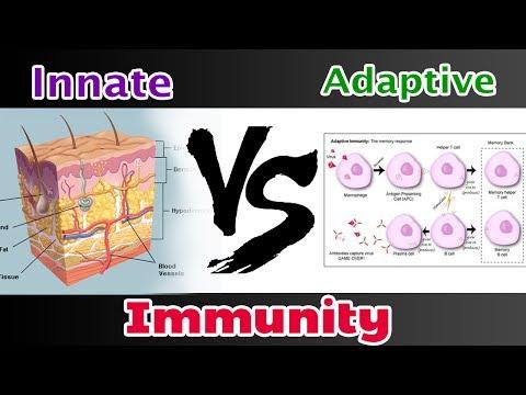Innate Immunity Vs  Adaptive Immunity
