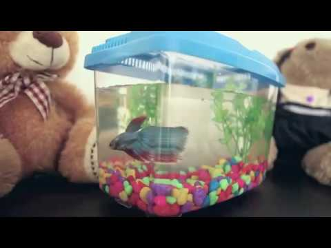 PET101 - SETTING UP YOUR BETTA FISH TANK