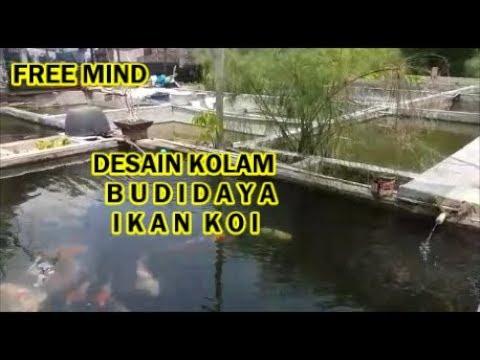New Desain Kolam Budidaya Ikan Koi Ternak Cepat Besar Bagi ...