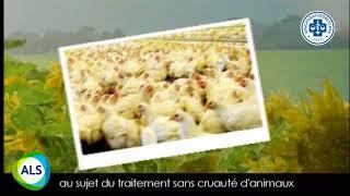 Ashish - ветеринарные препараты для всех видов животных
