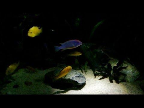 Освещение для рыбок по выгодным ценам. Освещение с доставкой на дом в минске.
