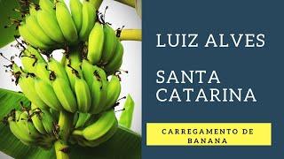 Baixar Luiz Alves SC | Carregamento de Banana