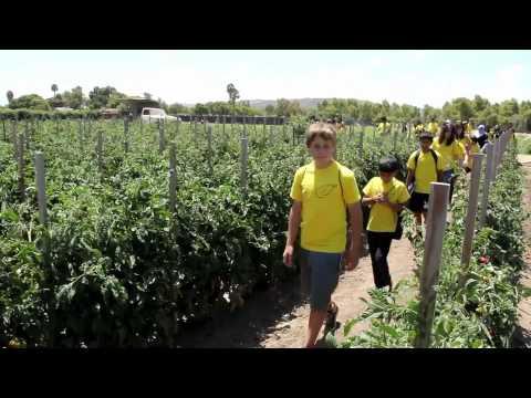 DARI - PASHTU STARTalk Summer Program at SDSU, Promotional Video