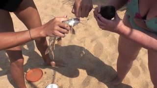 India Goa 2011. Fishing on the beach(India Goa 2011 Fishing on the beach. Рыбалка на пляже. Не самое плохое времяпровождение. Тем более что снасть это несколько..., 2011-04-26T12:01:34.000Z)