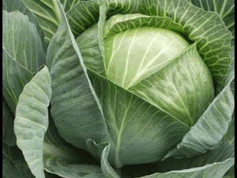 Как ухаживать капусту