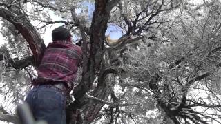 owen martin mountain lion bow hunt