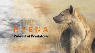 Spotted Hyena : Powerful Predators
