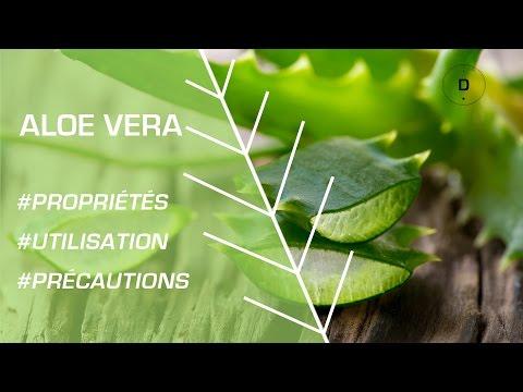 Phytothérapie : comment utiliser l'aloe vera ?
