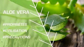 Comment utiliser l'aloe vera ? Phytothérapie