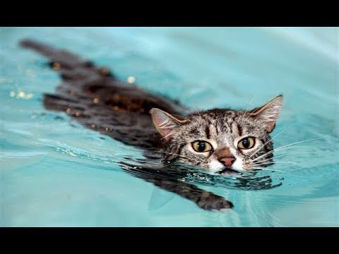 CATS SWIMMING 2019-FUNNY CATS😂😂😂😂