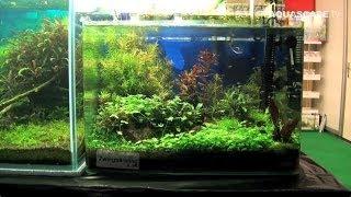 Aquarium Ideas - Planted Aquariums Of Heimtiermesse 2014, Hannover, Pt. 2
