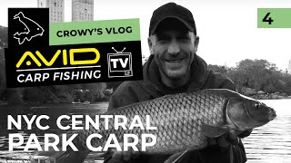 Crowy's Vlog- November 2018- Carp in the Big Apple
