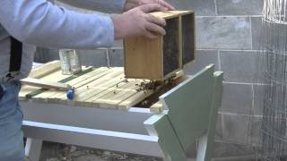 Introducing Bees To A Top Bar Hive