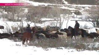 """""""Здесь есть волки и шакалы"""" – как живут фермеры в Нарынской области Кыргызстана"""
