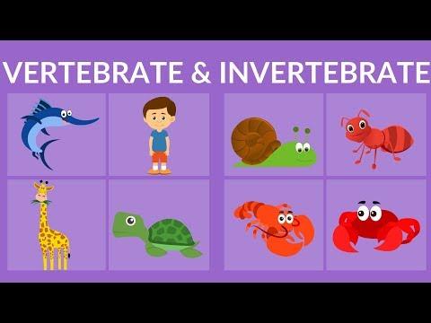 Vertebrate and Invertebrate animals | Video fro Kids