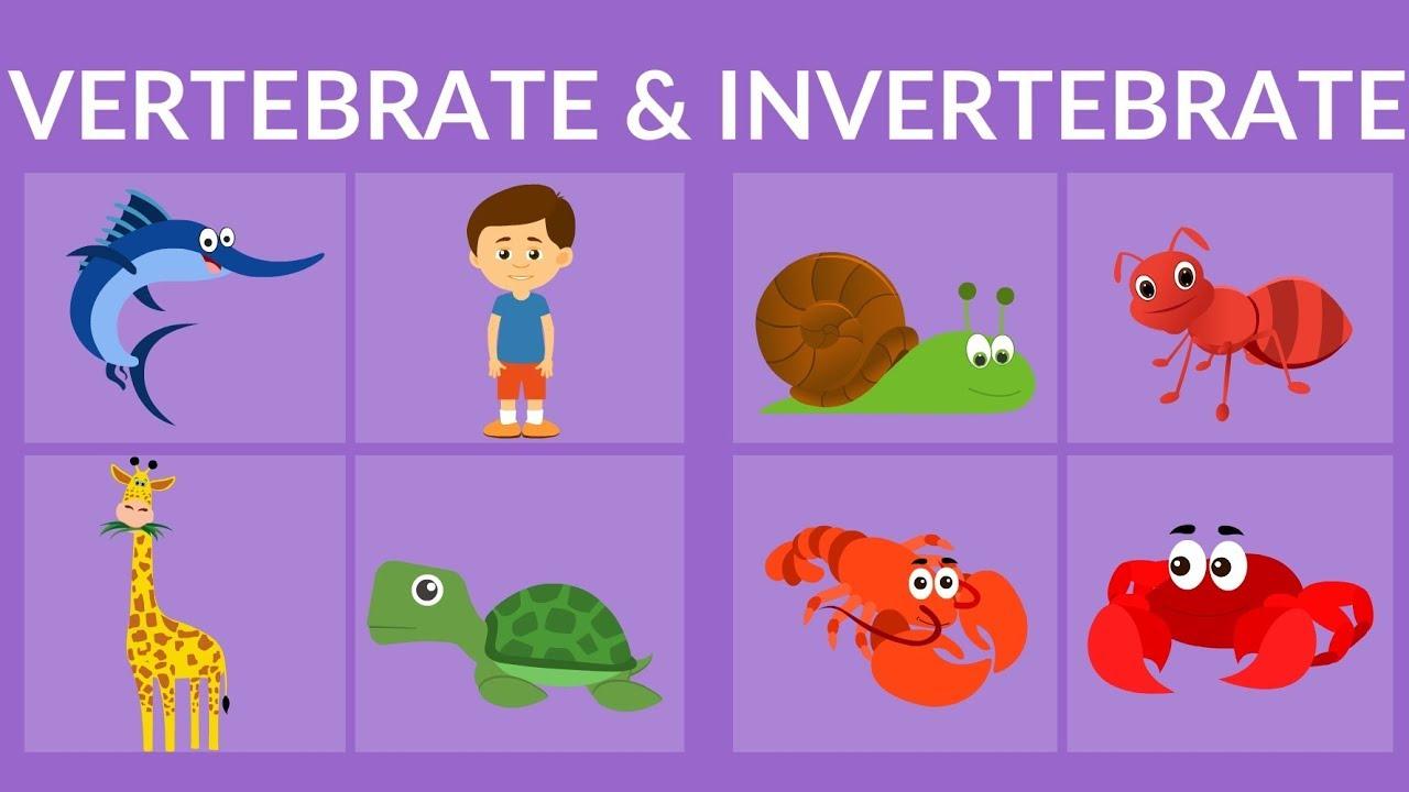 Vertebrate And Invertebrate Animals Video For Kids Youtube