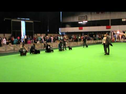 Int. Dogshow Rotterdam, Mainring Group 4/ Sunday 26 July 2015