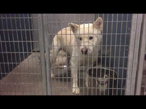 A Dog Has No Name / Scheduled for Euthanasia on 01/04/17