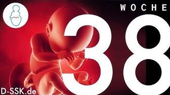 38. SSW / 38. Schwangerschaftswoche ✪ D-SSK.de