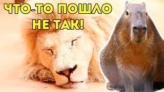 НАПАЛ ЛЕВ??? ЧТО-ТО ПОШЛО НЕ ТАК! Зоопарк: КАПИБАРА, ОБЕЗЬЯНЫ, ТИГР, ЯГУАР, ГЕПАРД и другие животные