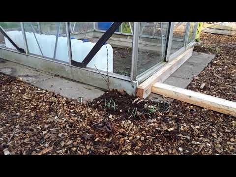 """#2000Subscribers """"High Winds Moved The Allotment Greenhouse""""    """"Who's Won The Competition""""  (334)"""