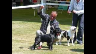 Bath Championship Dog Show 2010 - Staffordshire Bull Terriers