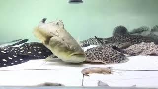 筍殼餵食(慢動作)