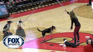 Dog Double Dutch at halftime of No. 21 Iowa at Rutgers | FOX SPORTS