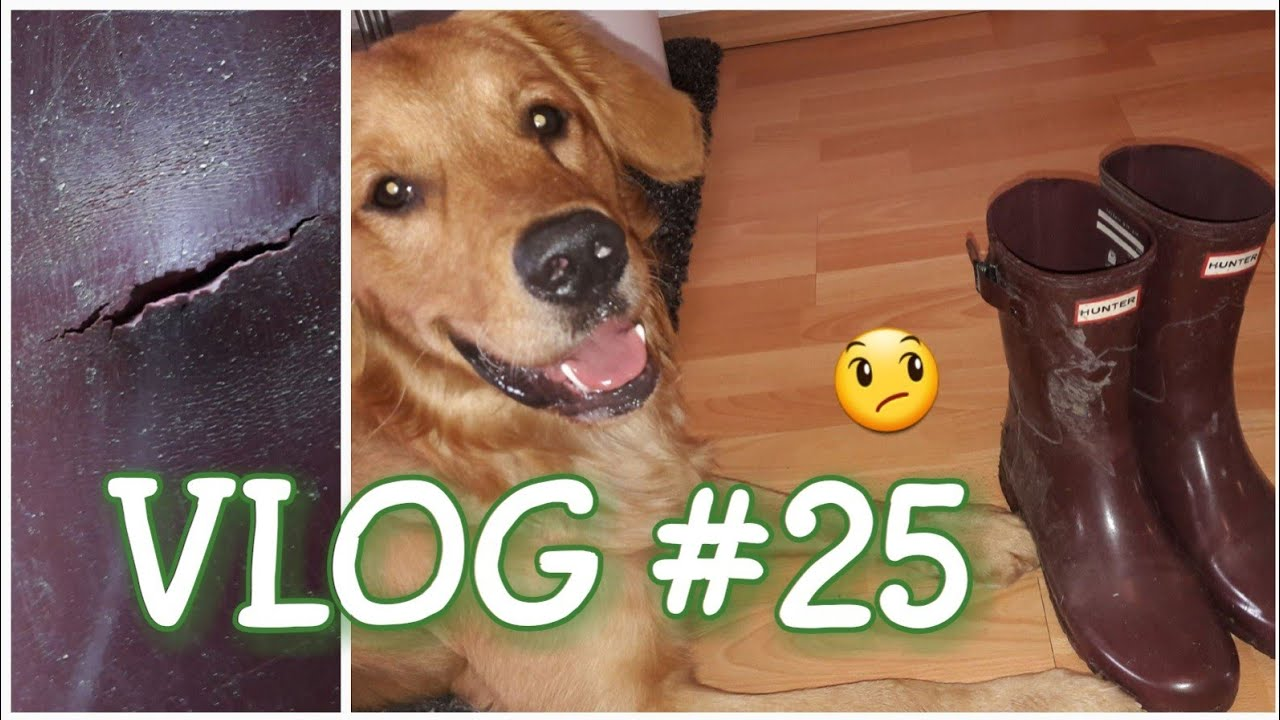 new product f0bdf 6d694 VLOG #25 / kaputte HUNTER Stiefel 😱 / Hundekoffer packen