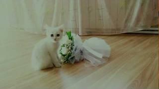 ммм....  какой вкусный букет невесты