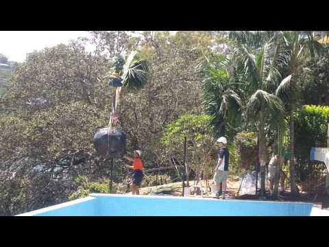 Kentia Palm delivery to poolside