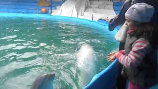 Дети и дельфины Новороссийск