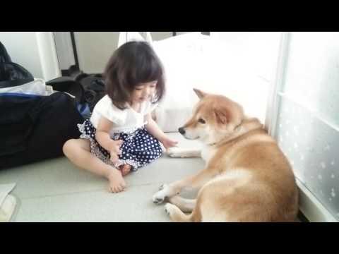 柴犬と愛娘のふれあい