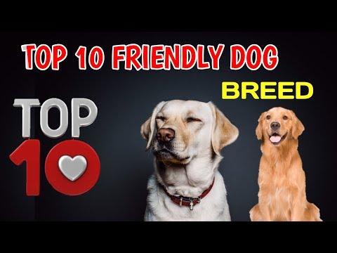 TOP 10 Friendly Dog Breeds / 10 FRIENDLY DOG BREED