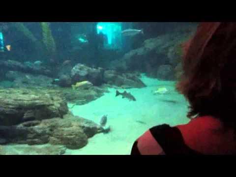 Monterey Bay Aquarium VIP Full Tour!!!